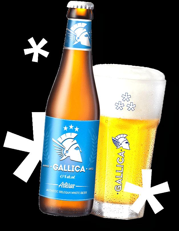 GALLICA-asterus pivo